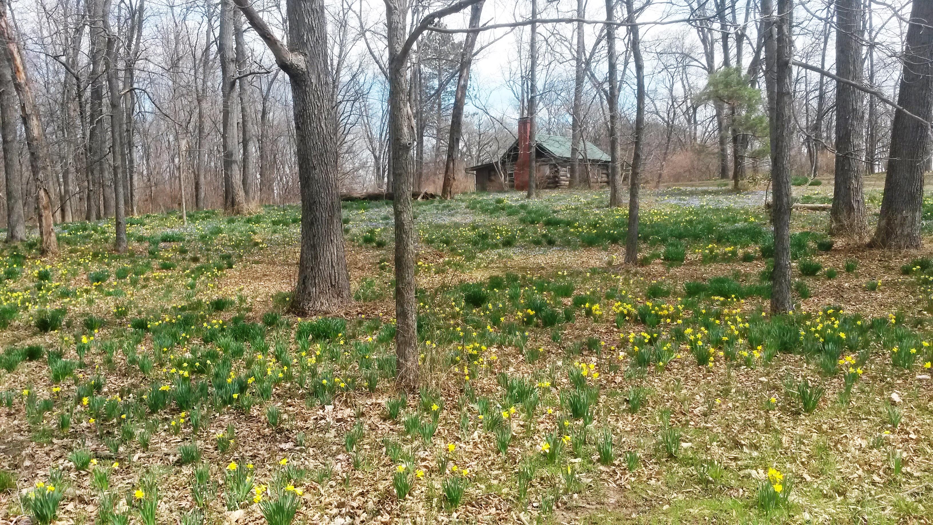 cabin spring 2014